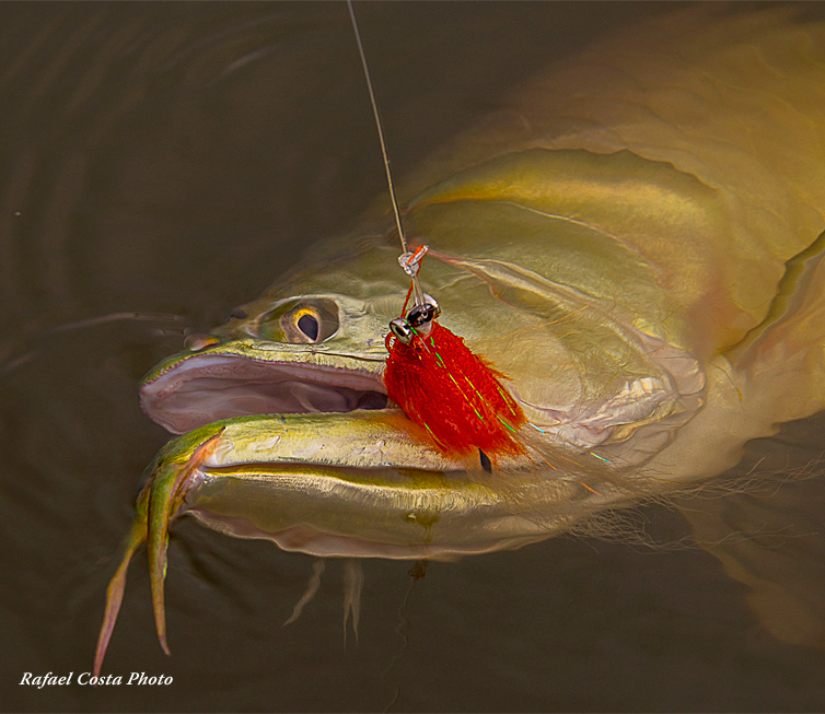 The Fly Shop Images
