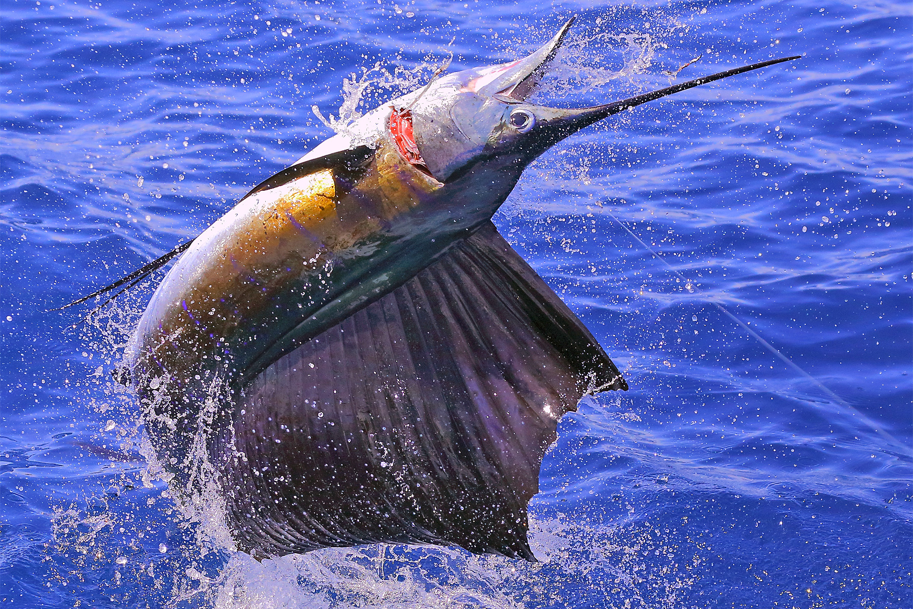billfish fly fishing sailfish fishing lodges
