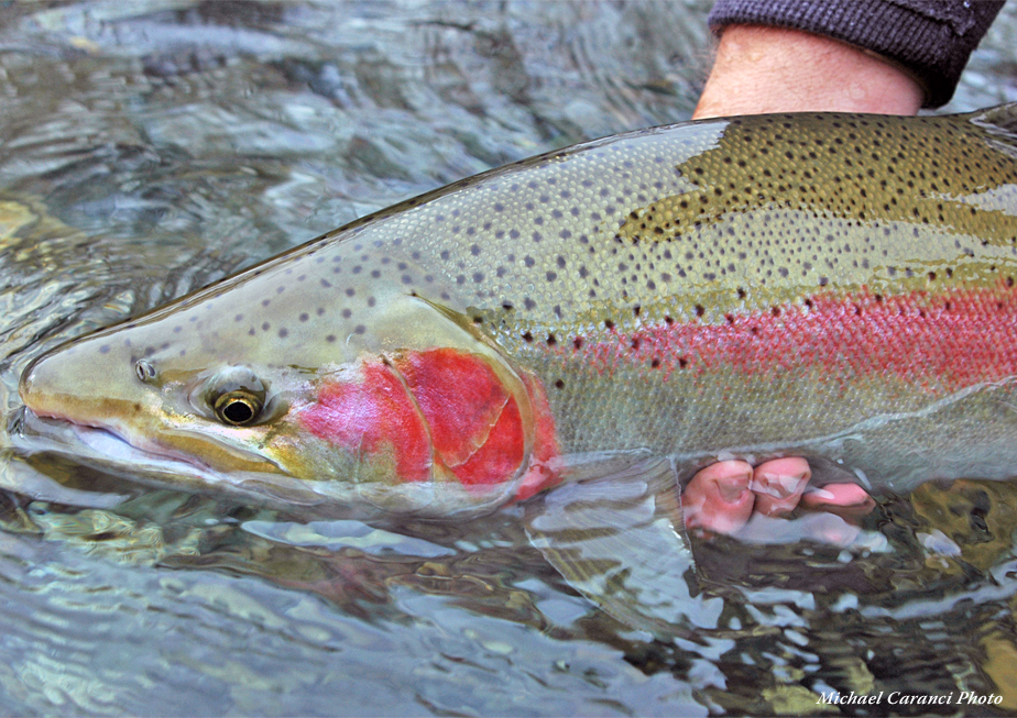 Trinity River Fly Fishing Guide - Steelhead Fly Fishing