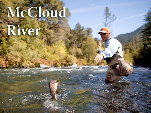 Northern California Fly Fishing Stream Report